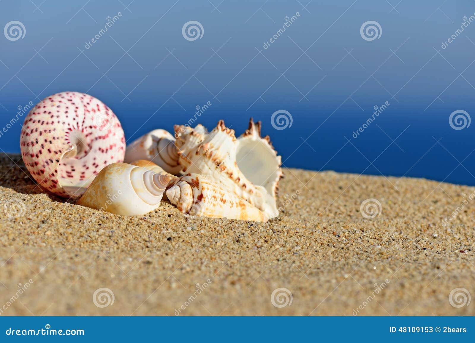 Escudos na praia arenosa