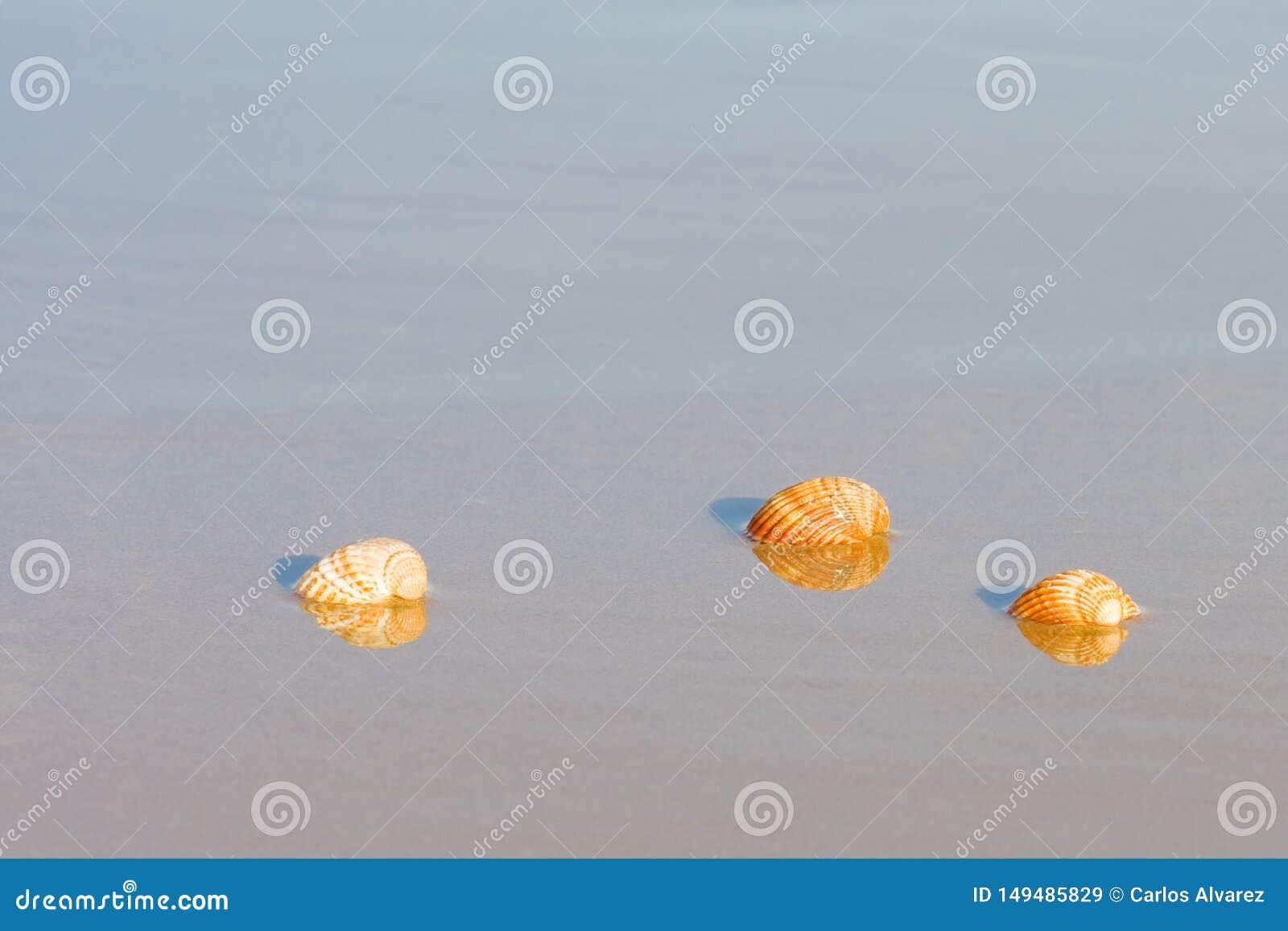 Escudos na praia