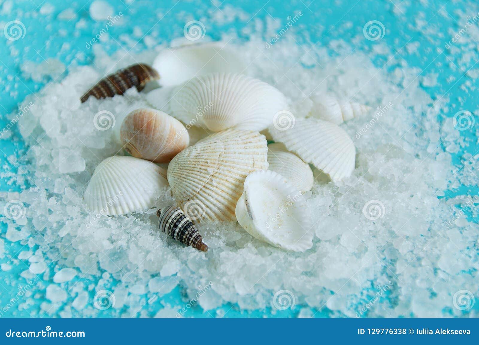 Escudos no sal do mar branco