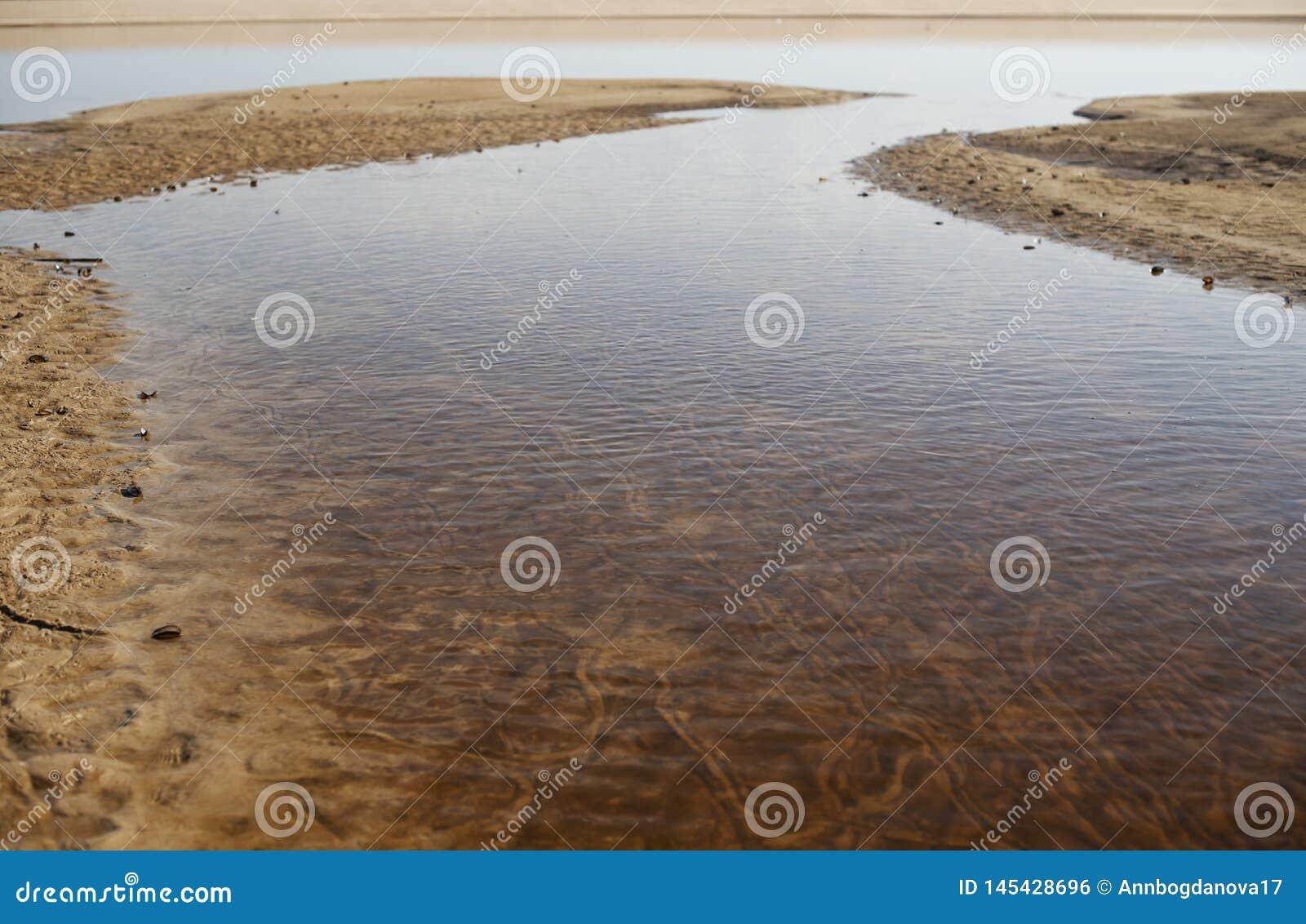 Escudos vazios do mexilhão, encontrando-se na areia