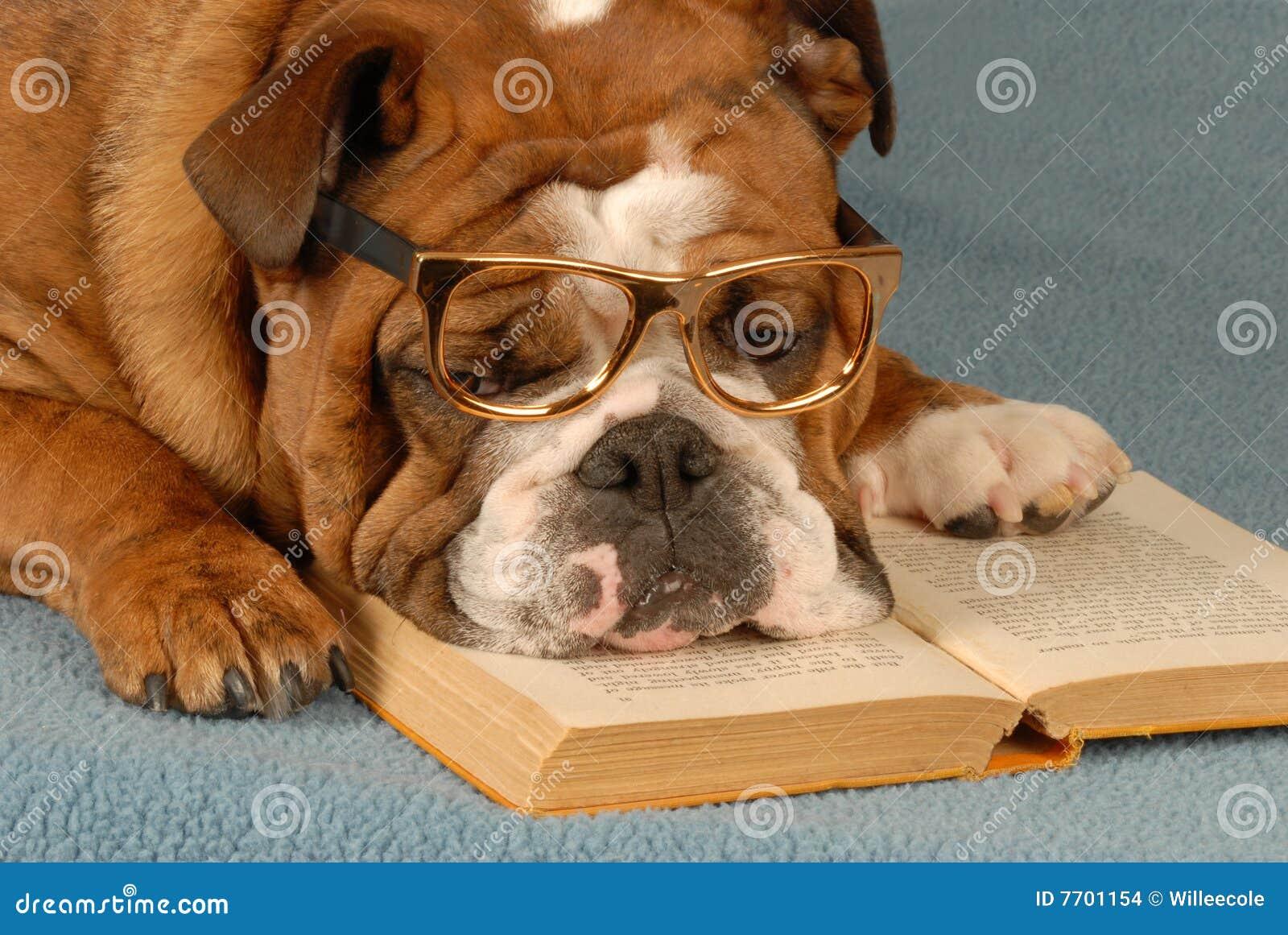 Escuela de la obediencia del perro
