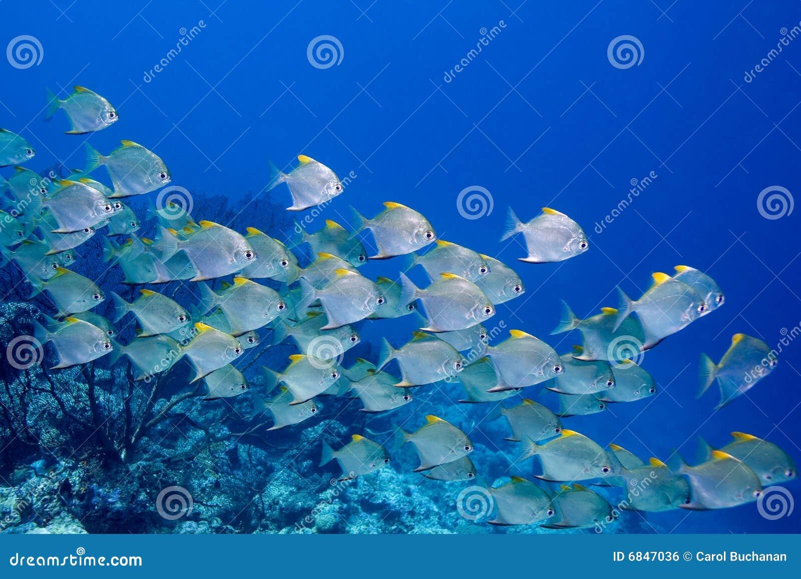 Escuela de pescados
