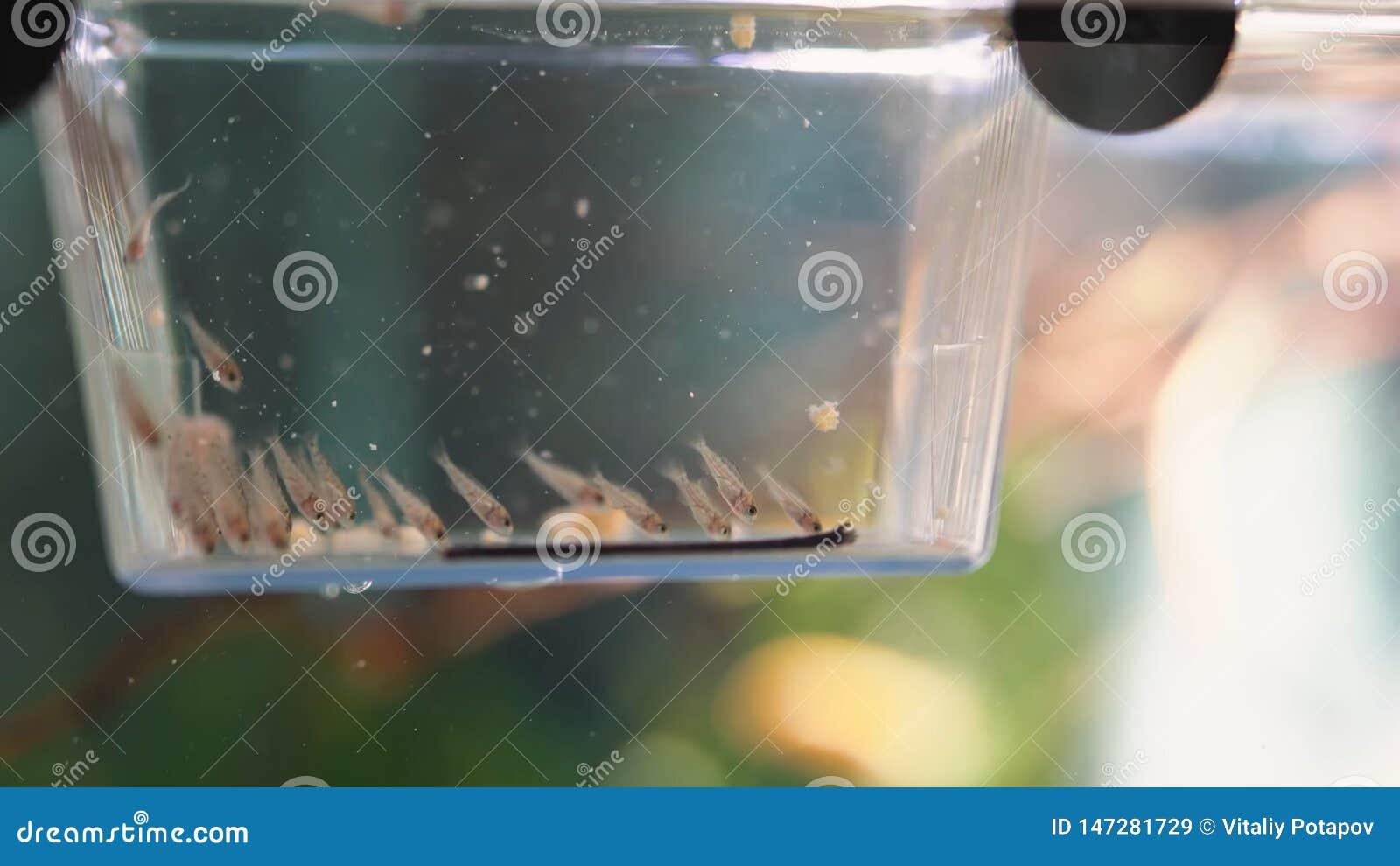 Escuela de pescados en un criadero
