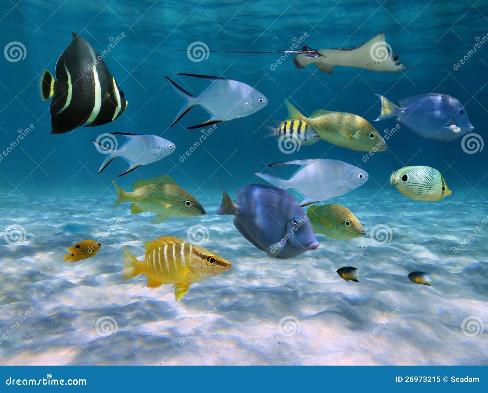 Escuela de pescados sobre un suelo marino arenoso