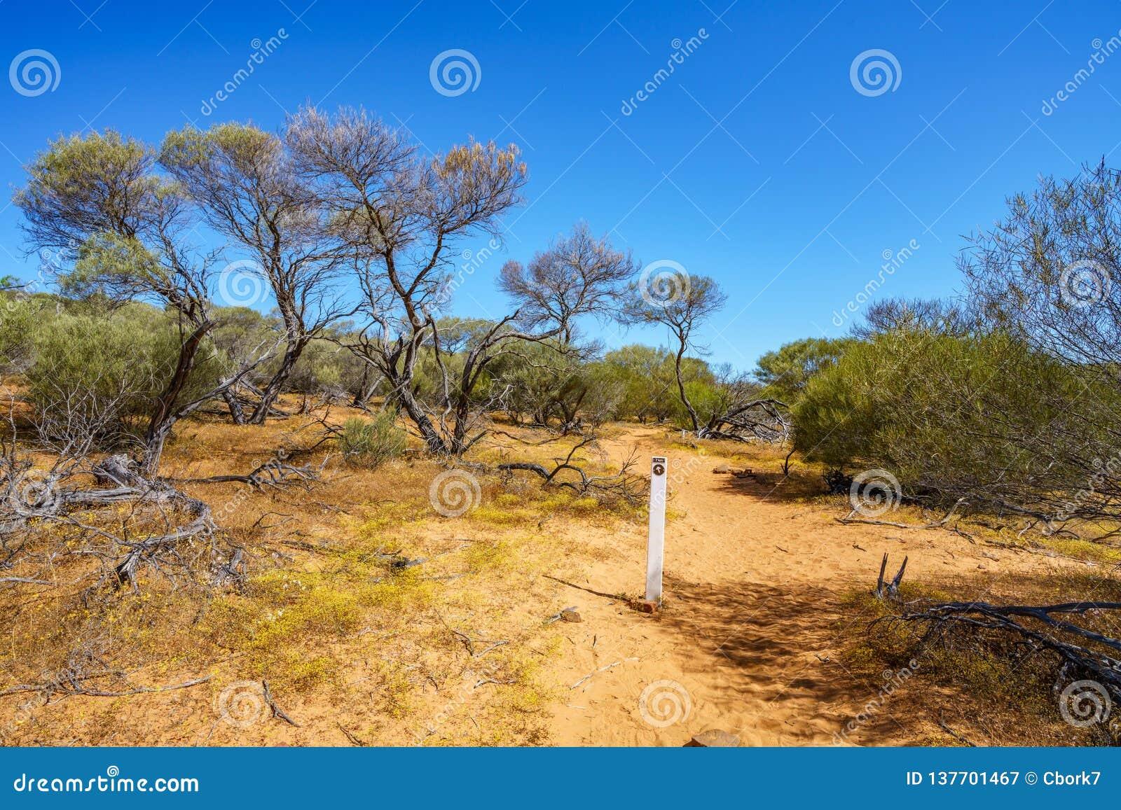 Escursione della traccia del ciclo della finestra delle nature, parco nazionale di kalbarri, Australia occidentale 5
