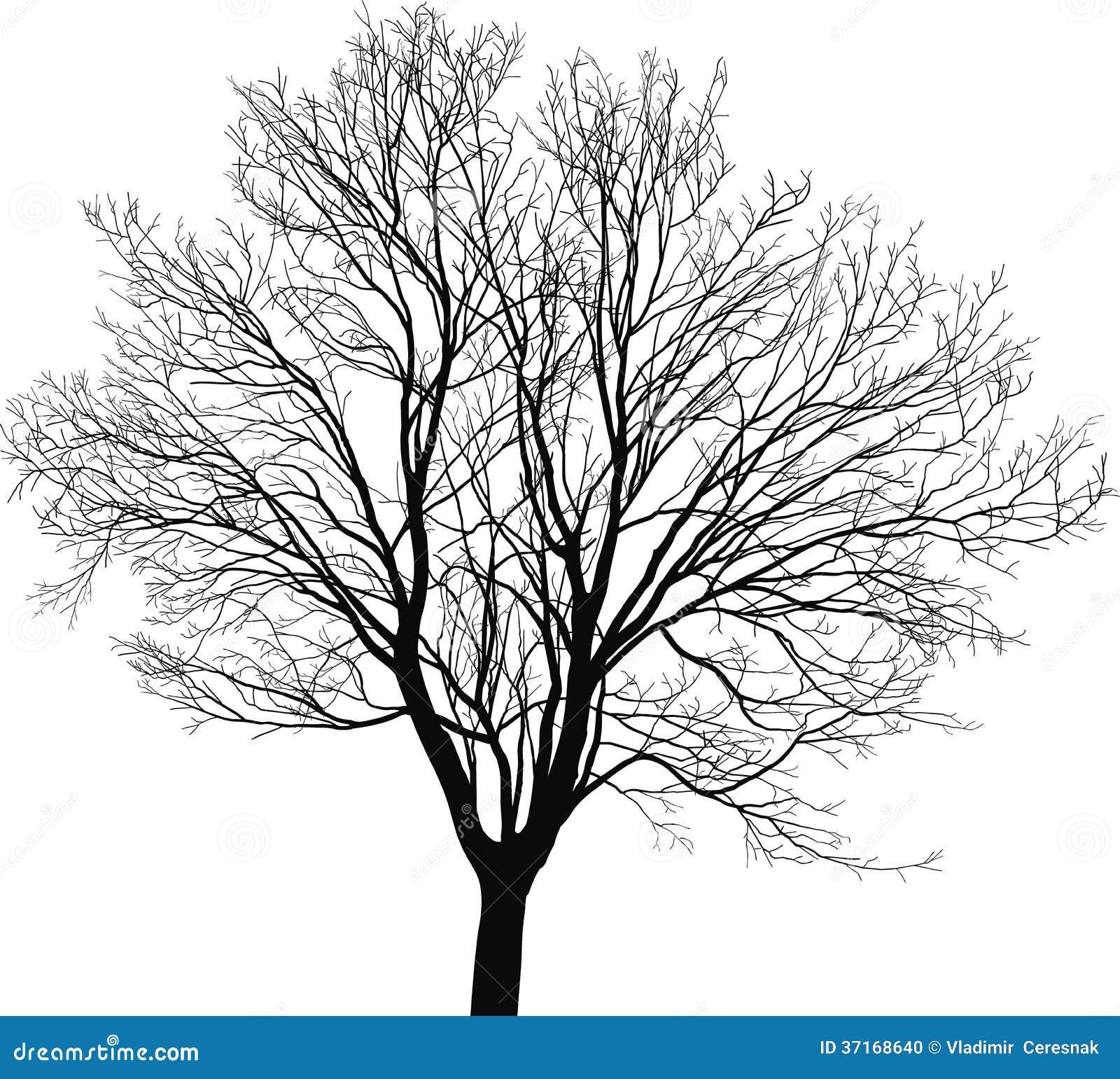 Esdoorn jonge boom