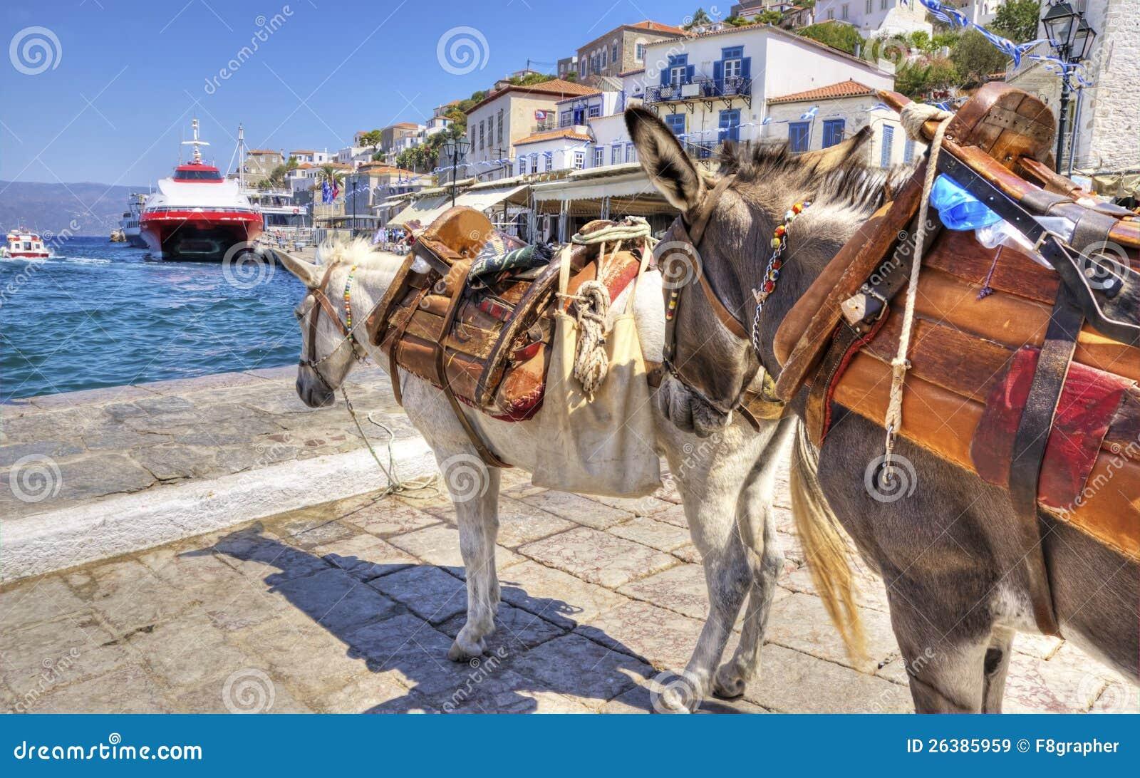 Esel auf griechischer Insel