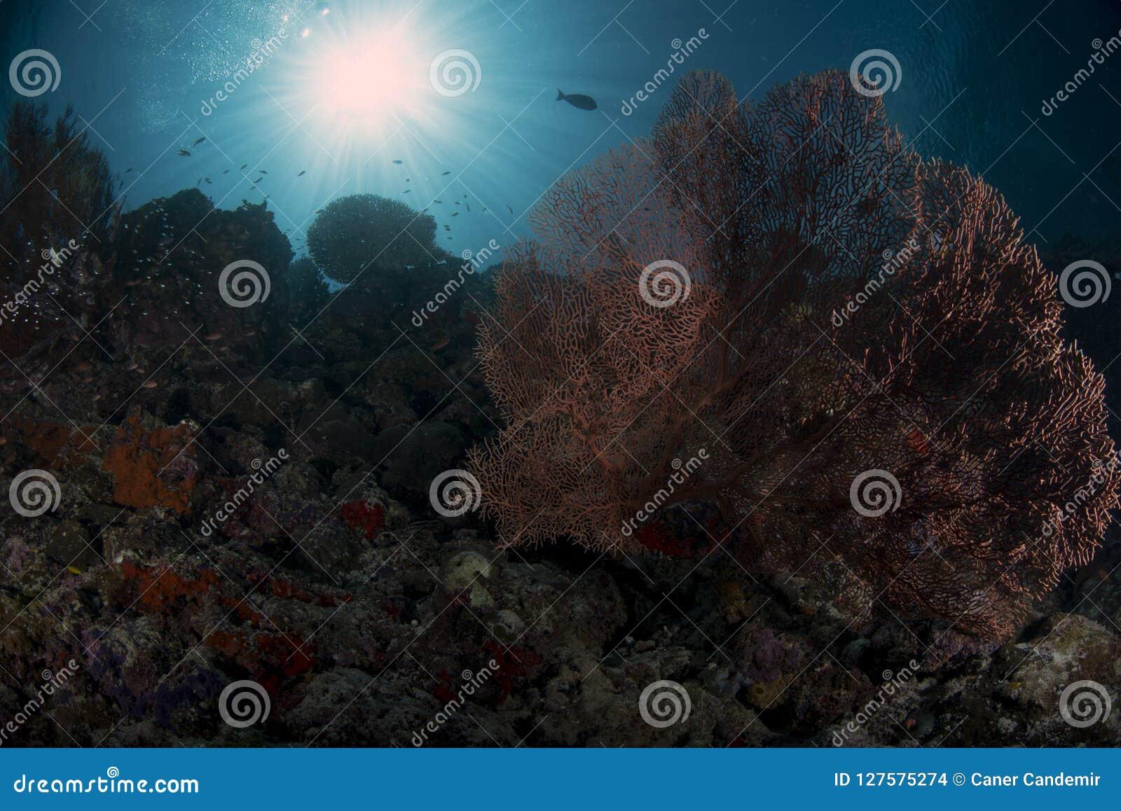 Espèce marine sur le mur avec le fond bleu
