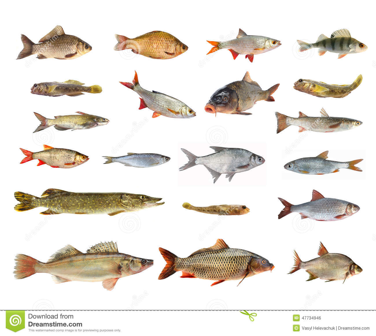 Esp ces des poissons de rivi re photo stock image 47734946 for Fische arten