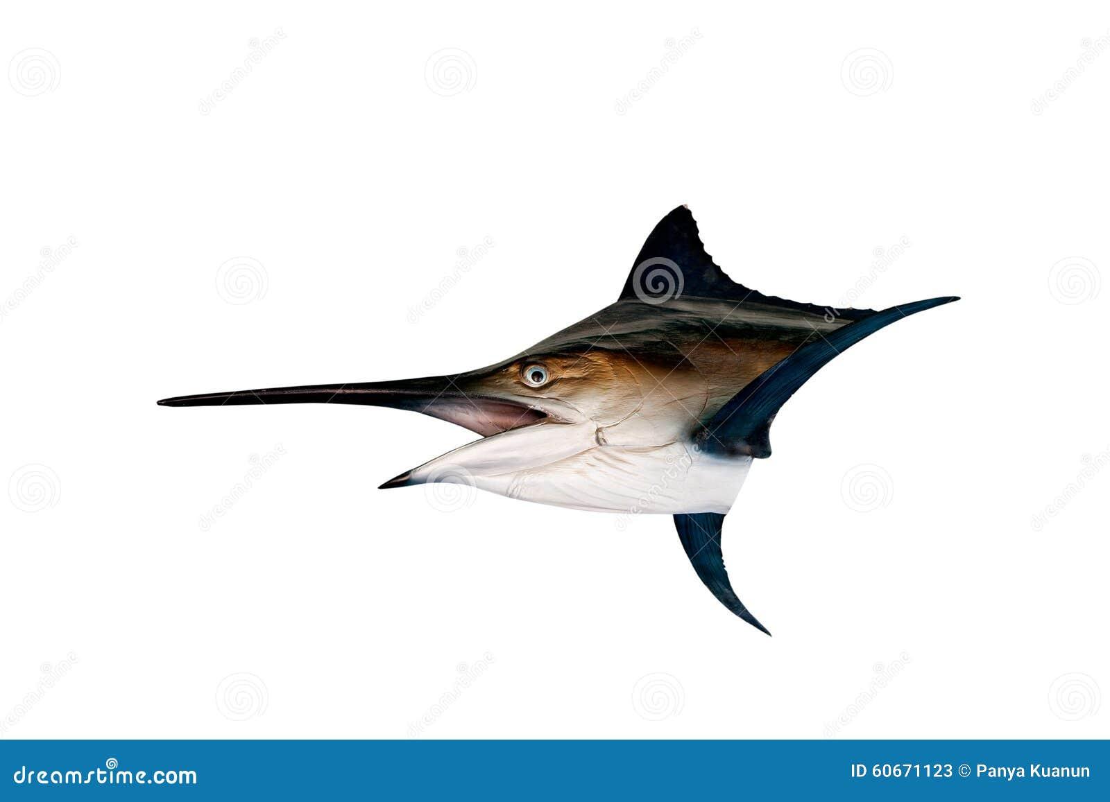 Espadim - espadarte, isolado dos peixes de água salgada do Sailfish (Istiophorus)