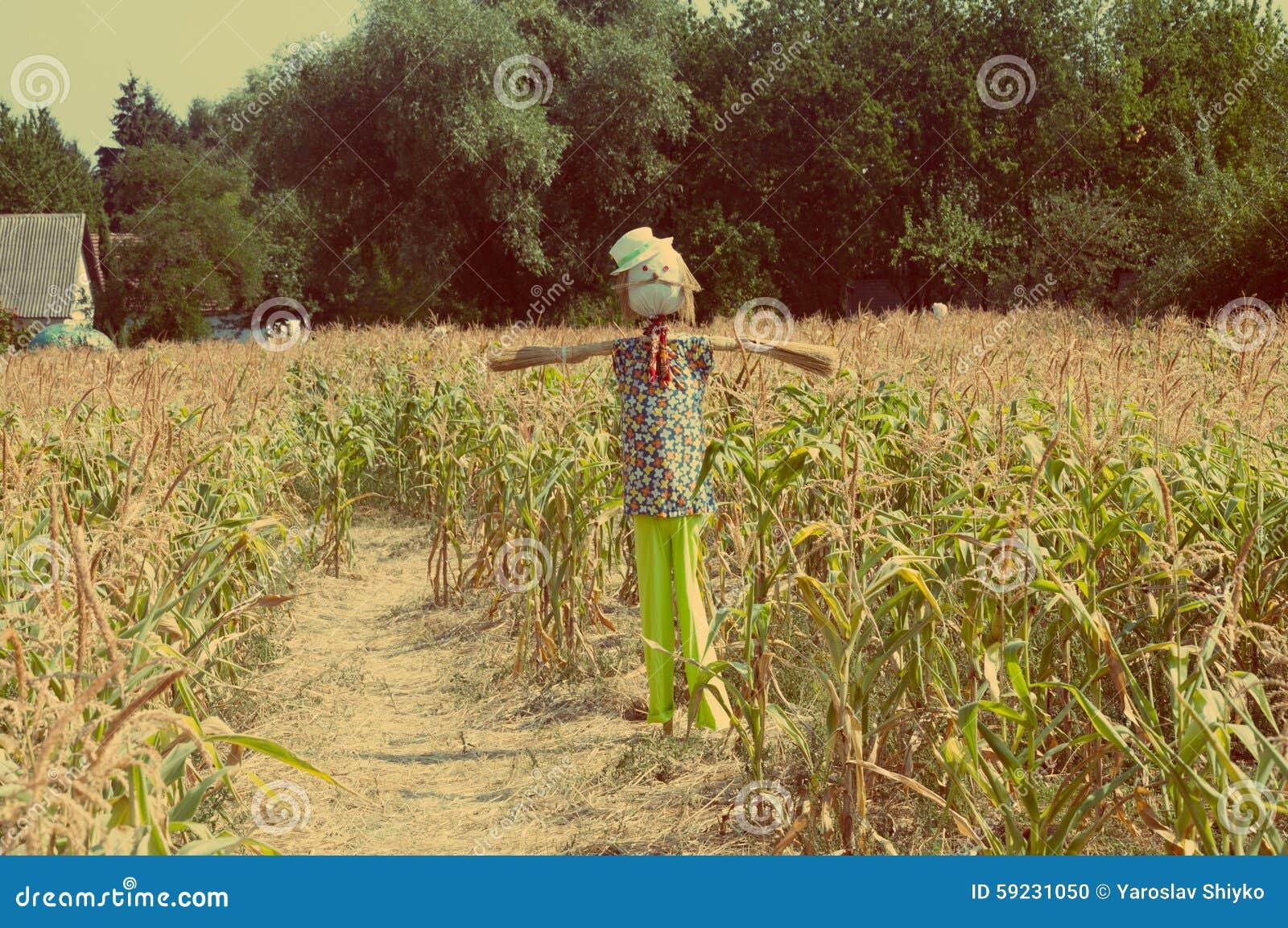 Download Espantapájaros Viejo En Un Campo De Maíz Foto de archivo - Imagen de cosecha, decorativo: 59231050