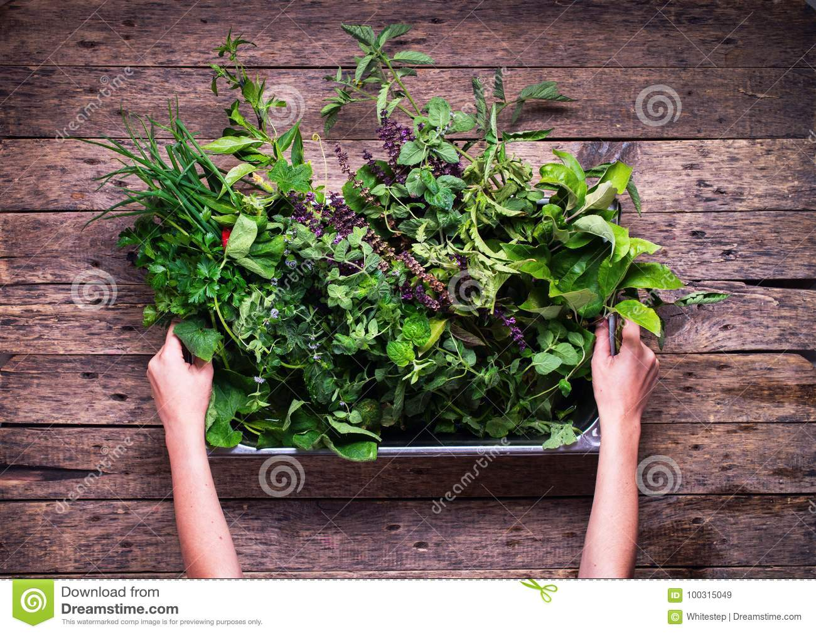 Especiaria pequena Herb Garden Rustic Wooden Table