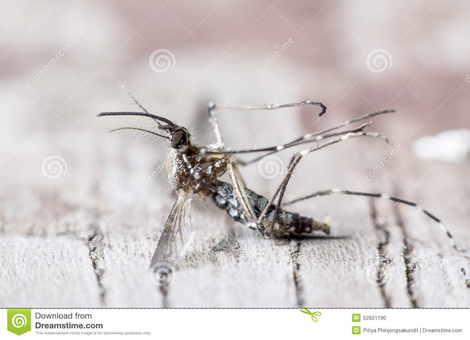 Especie de causa de los mosquitos de la malaria