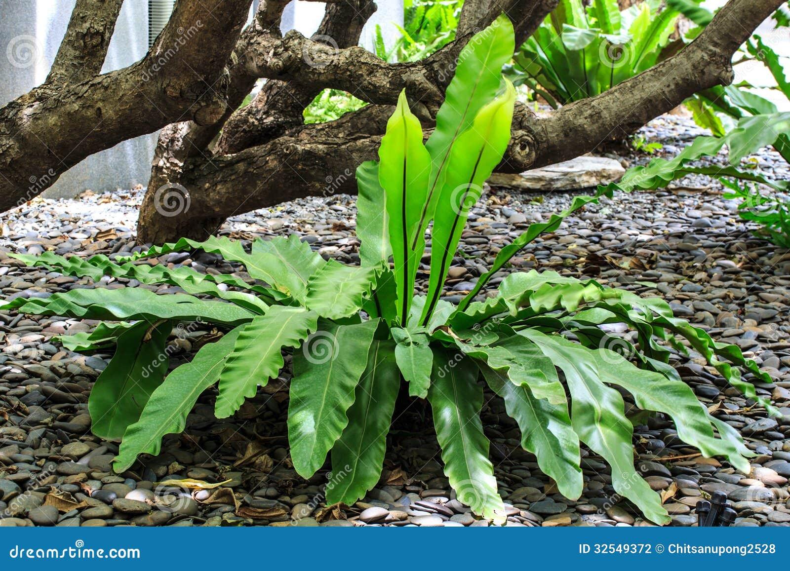 Especie de la planta en bosques tropicales fotograf a de for Plantas ornamentales tropicales