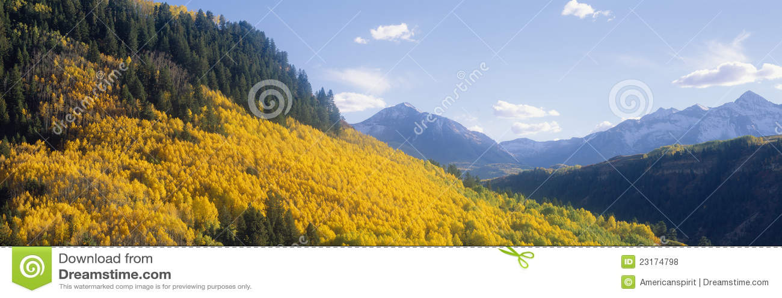 Espen im Herbst