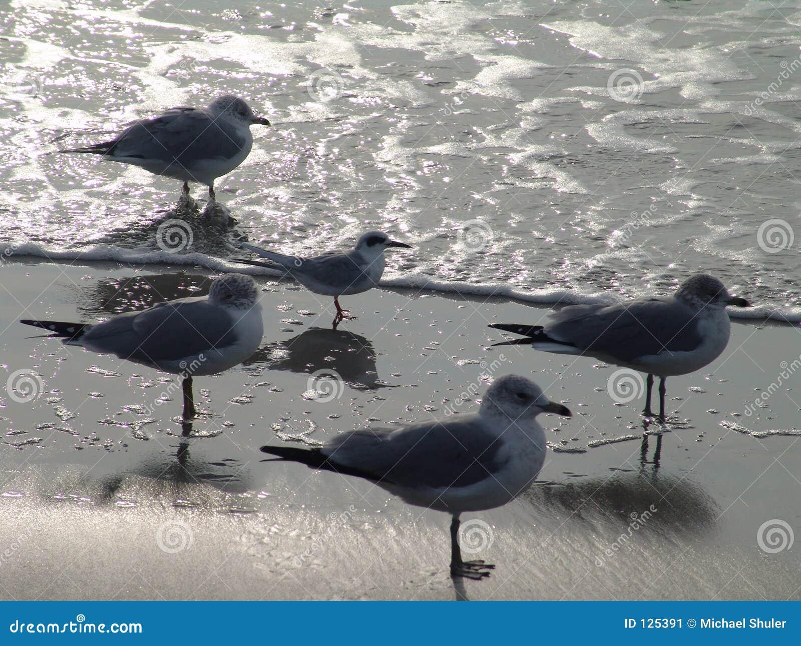 Espera das gaivotas