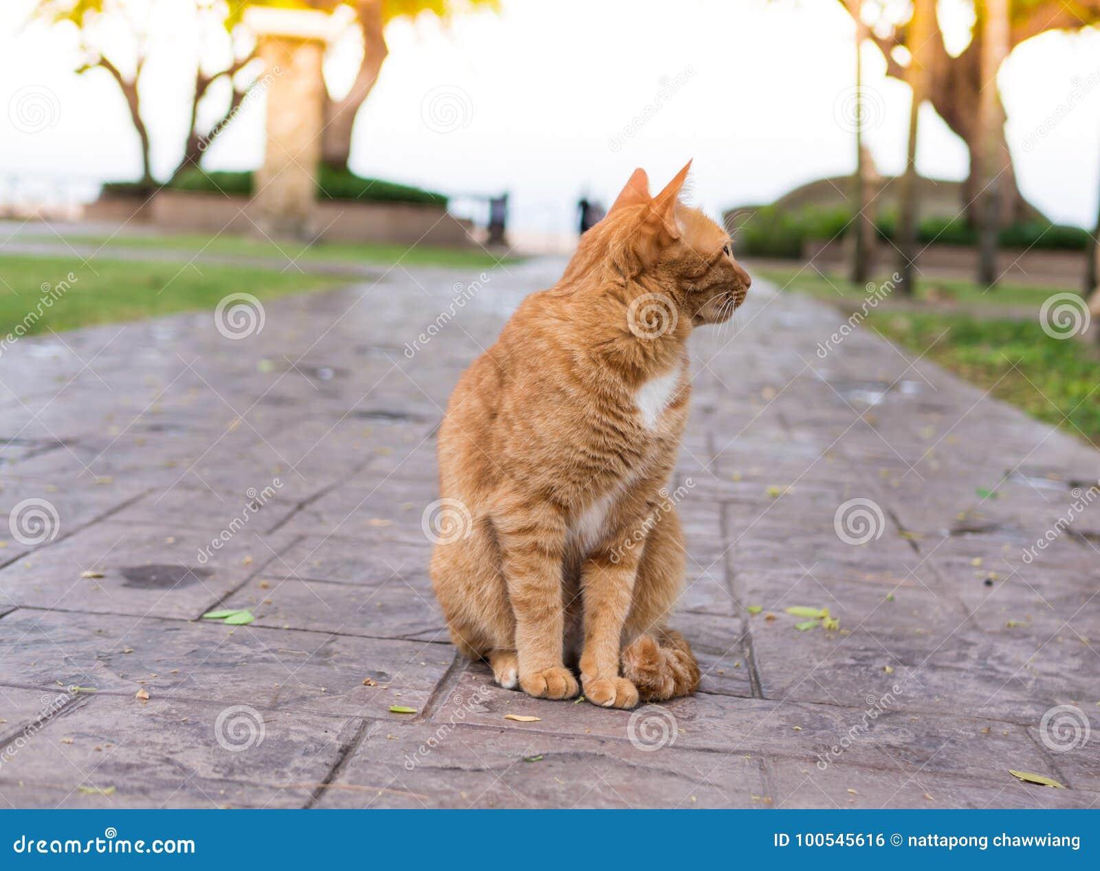 Espera del gato para el dueño