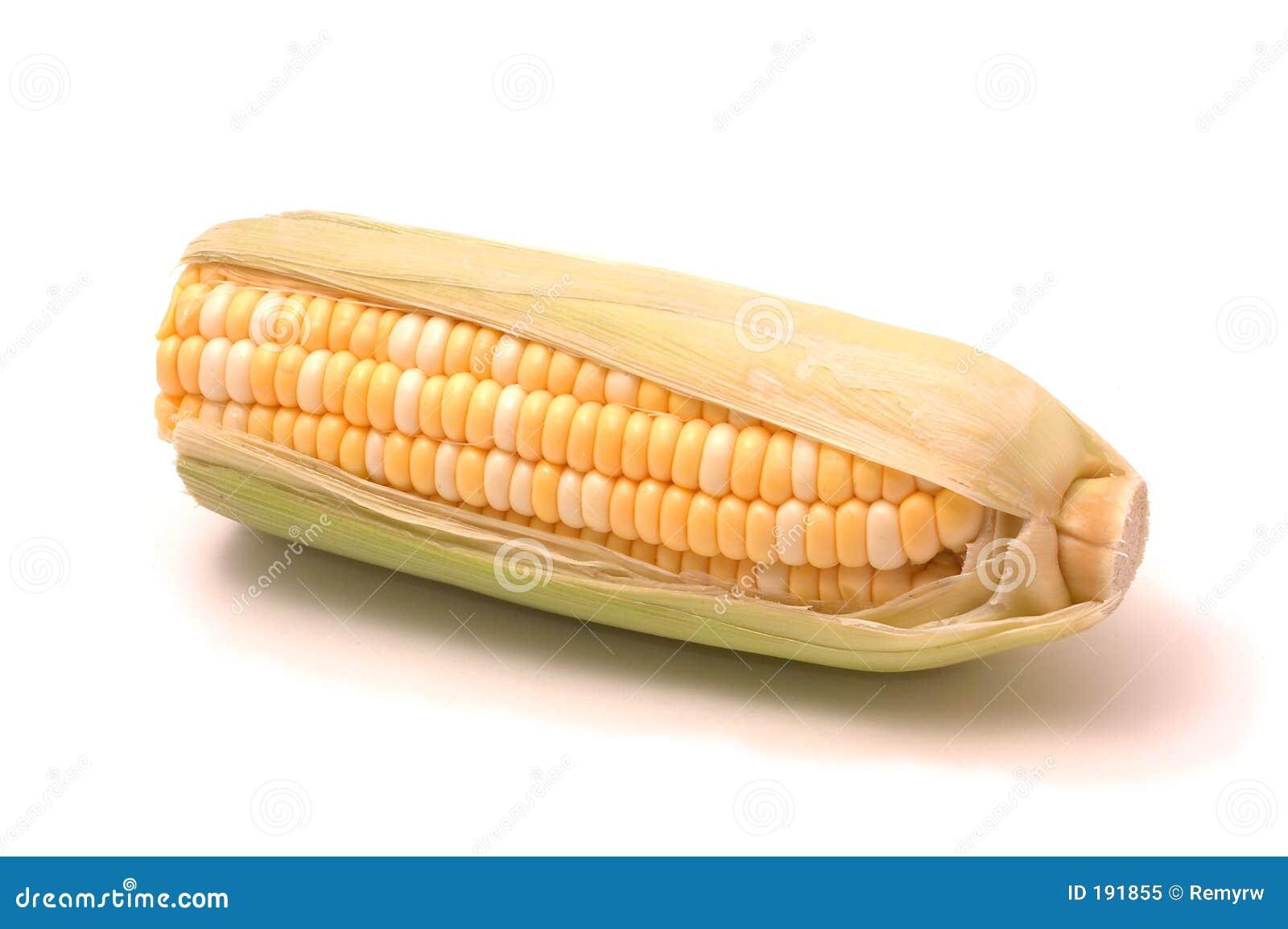 Espiga de trigo sobre blanco