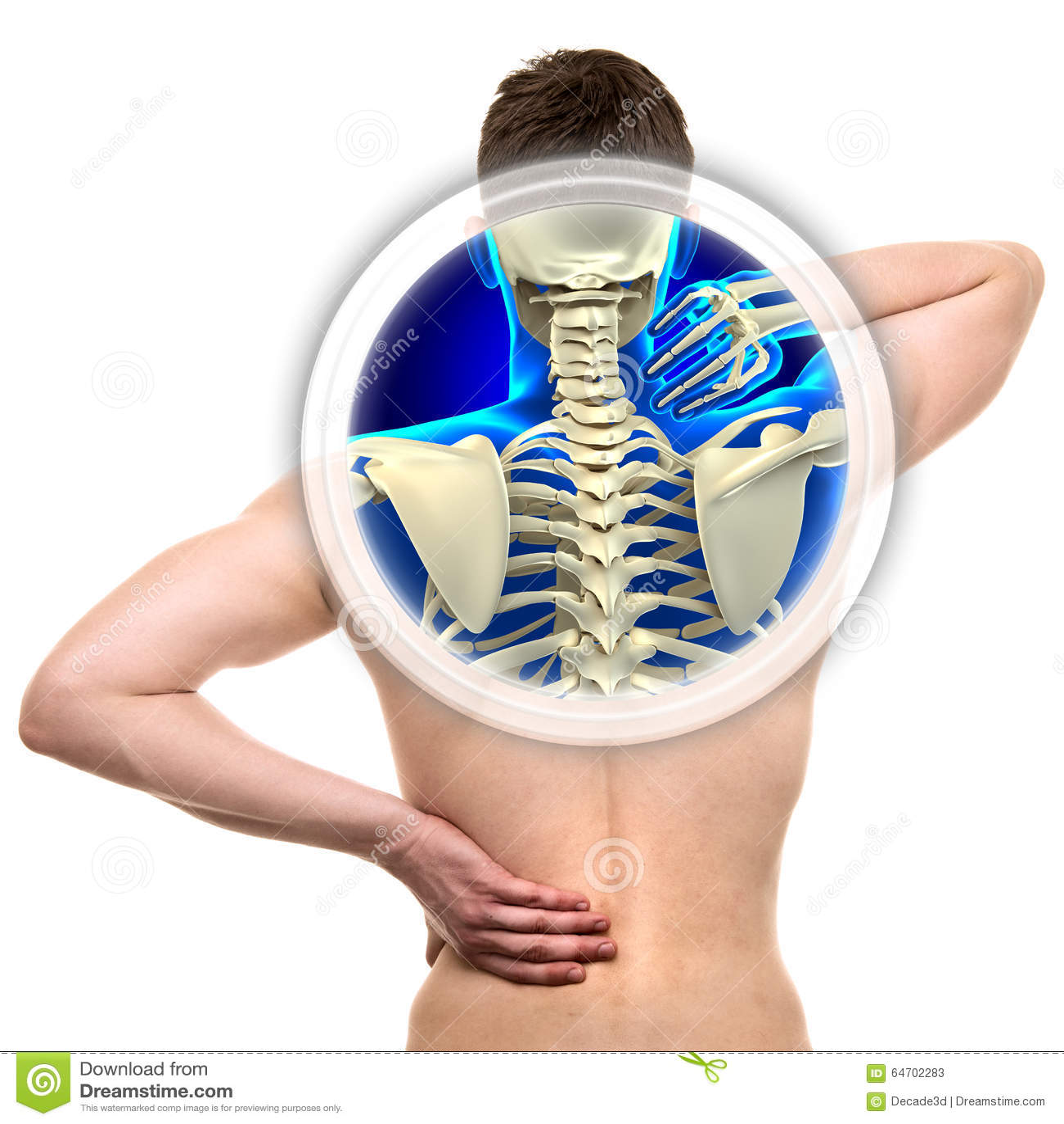 Increíble Anatomía Espina Dorsal De Rata Imagen - Imágenes de ...