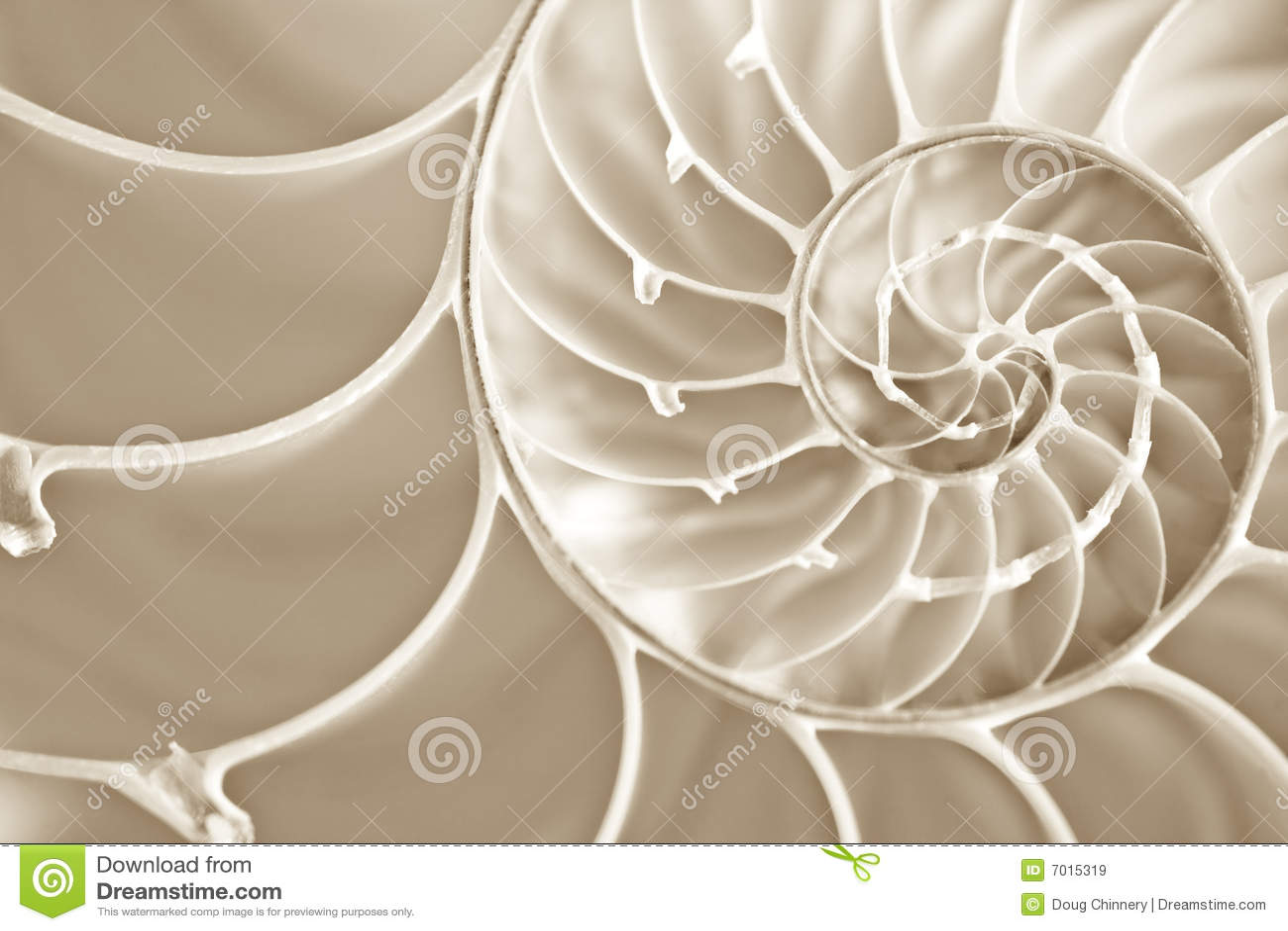 Espiral de Fibbonachi en shell del nautilus