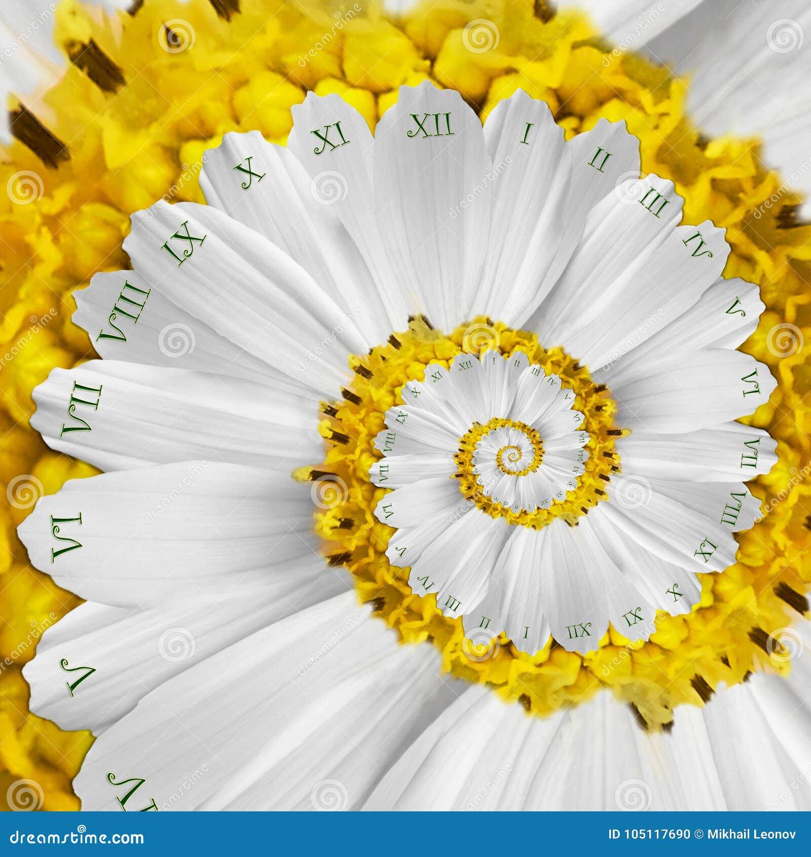 Espiral surrealista del fractal del extracto del reloj de la flor amarilla blanca Fondo abstracto inusual del fractal de la textu