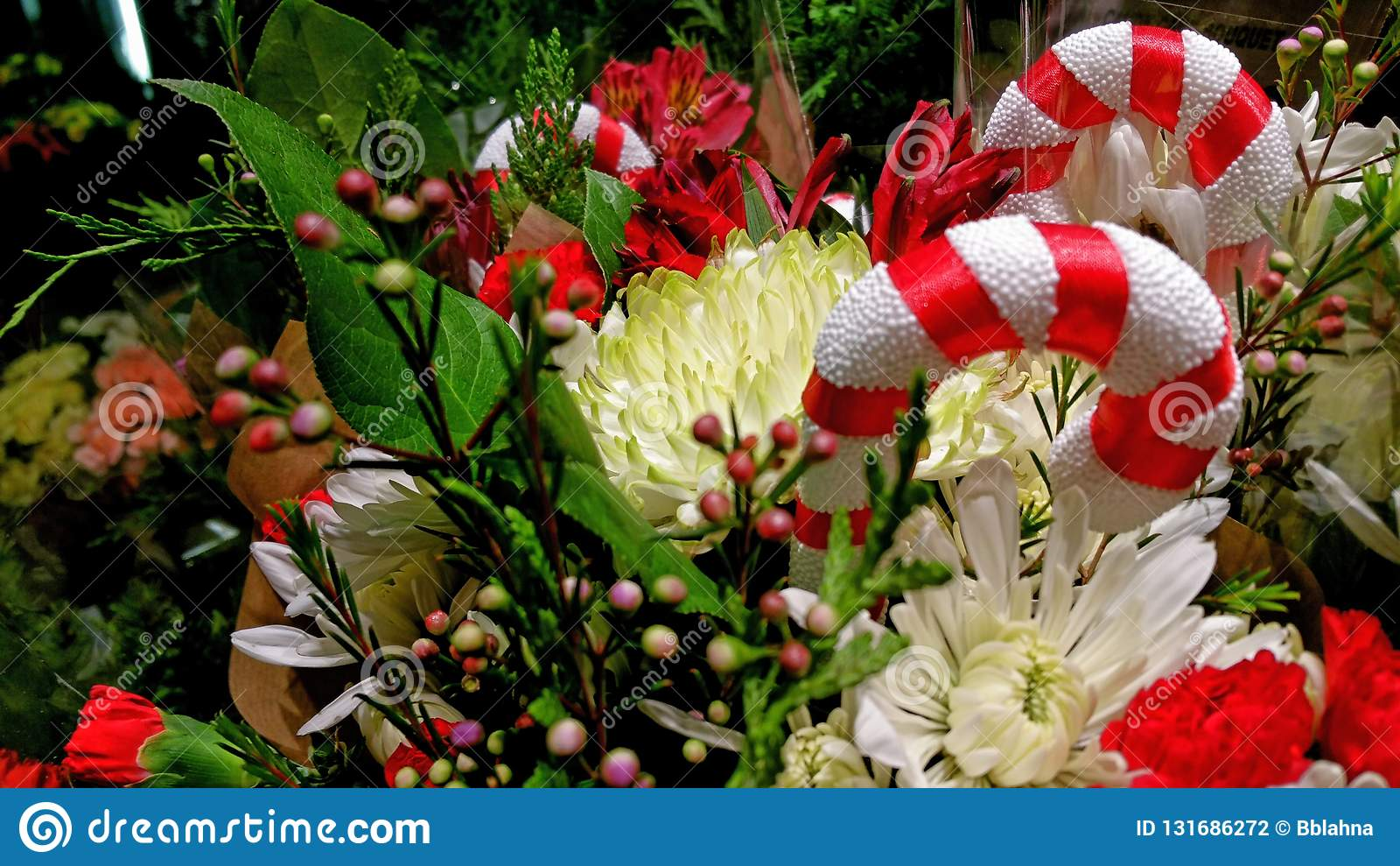 Esplendor da época de Natal! Bastões das bagas, os florais & de doces