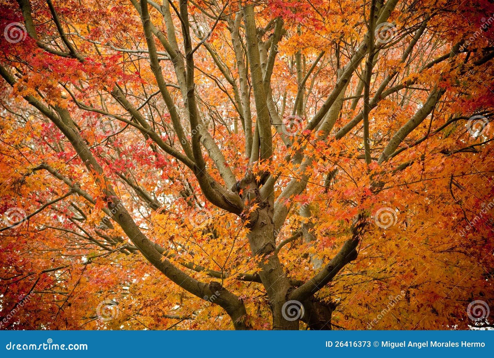 Esplendor del otoño