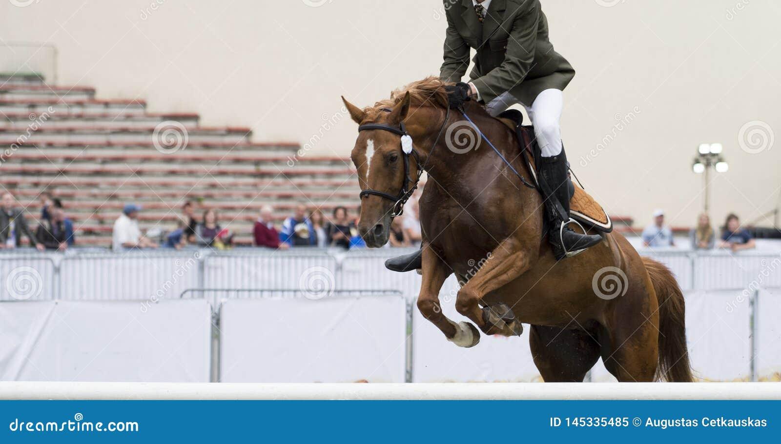 Esportes equestres, cavalo que salta, mostra que salta, equita??o