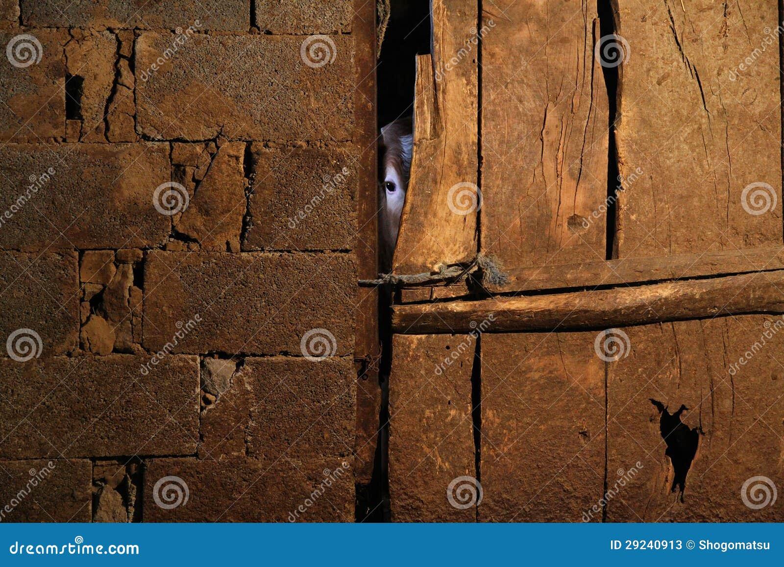 Download Espreitando a vaca imagem de stock. Imagem de pedra, vaca - 29240913