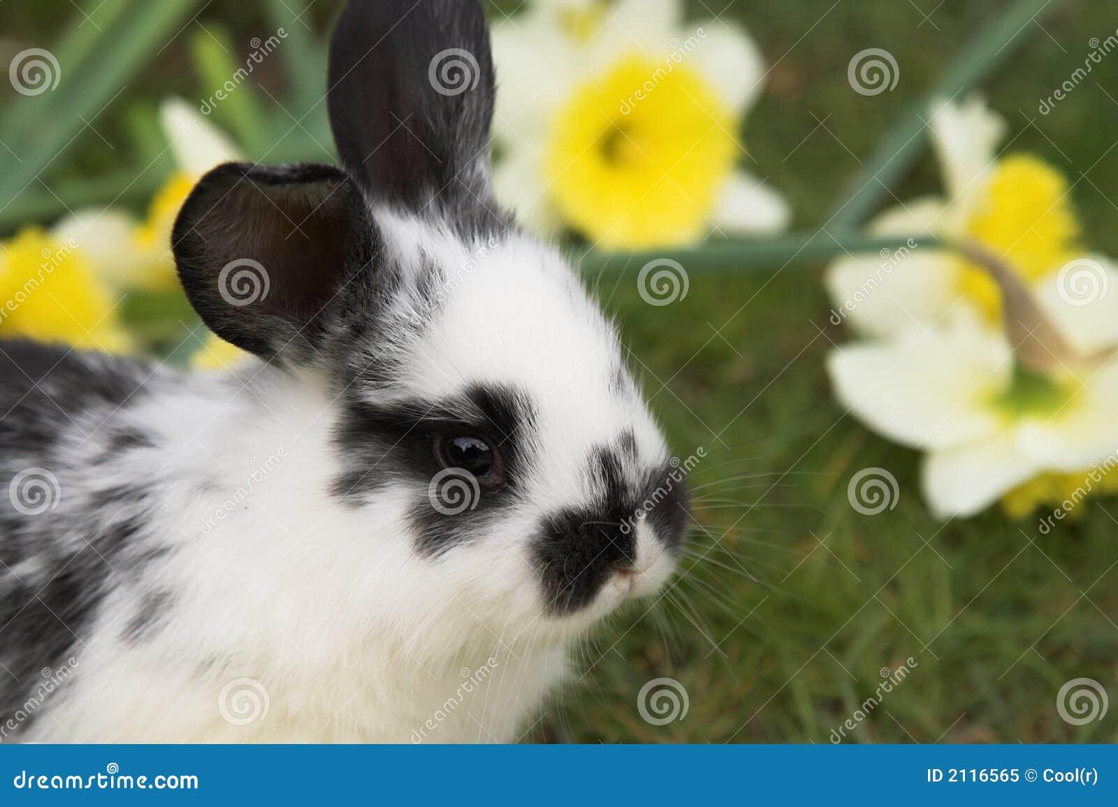 Espreitar muito bonito do coelho de Easter