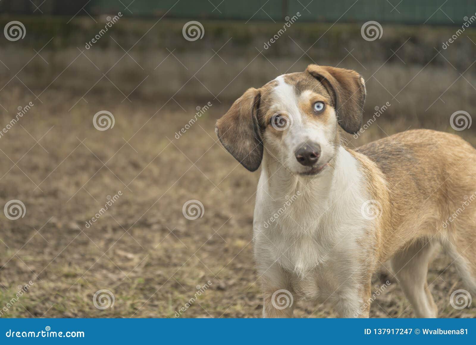 Espressione divertente del fronte del cucciolo di cane