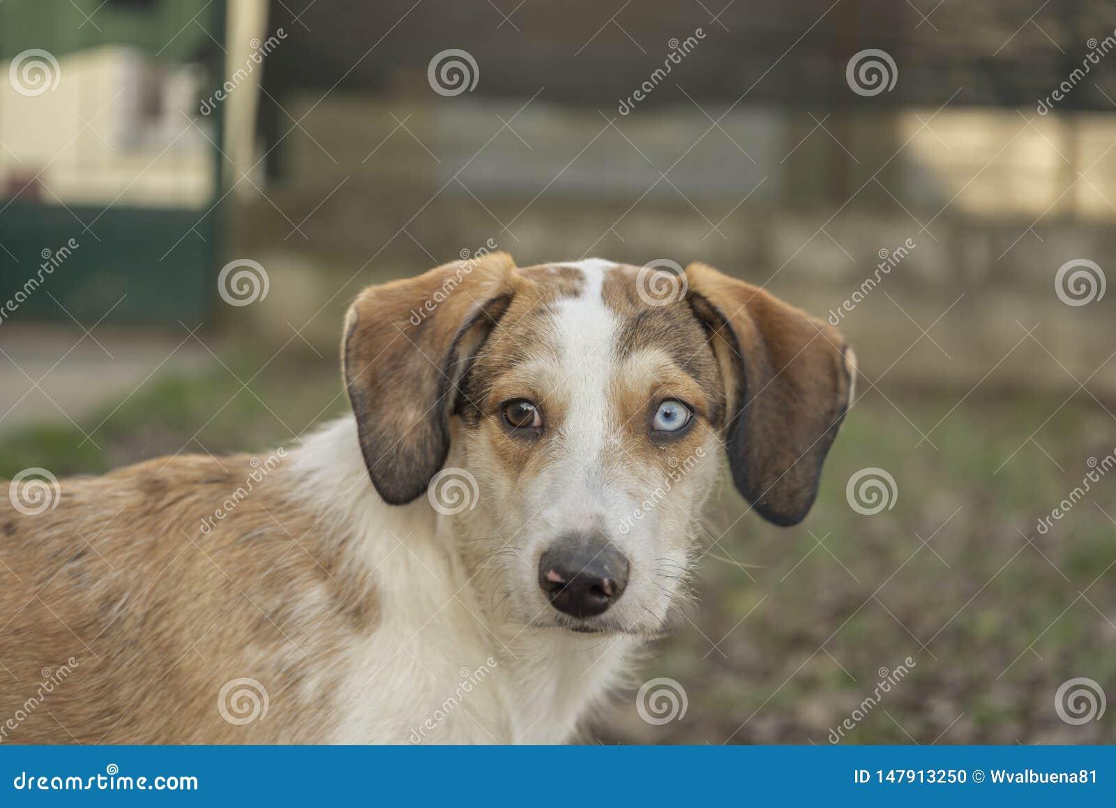 Espressione facciale divertente del ritratto del cane