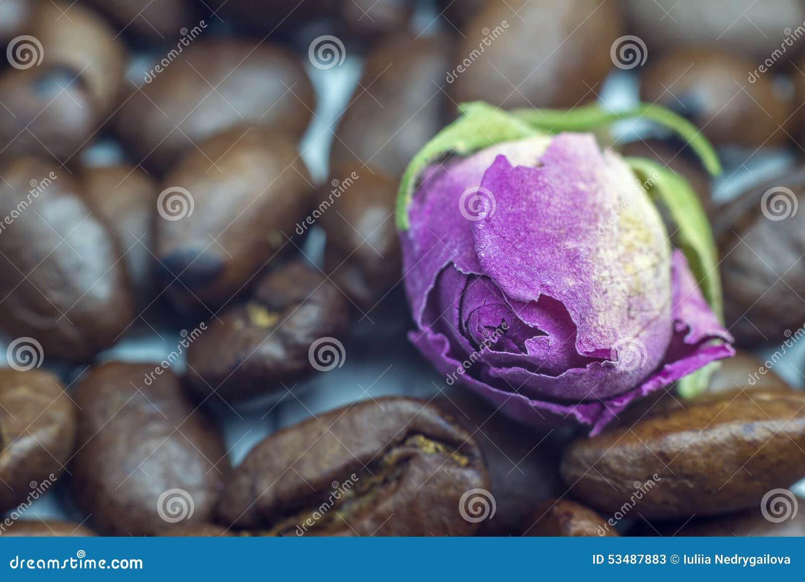 Esprit bonjour Fin de rose de grains de café et d offre