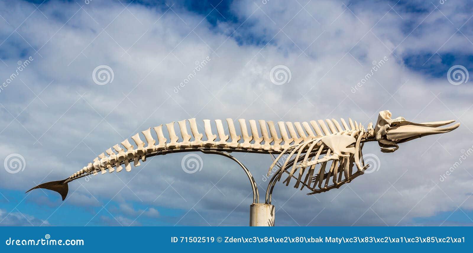Esqueleto De La Ballena - EL Cotillo, Fuerteventura, España Imagen ...