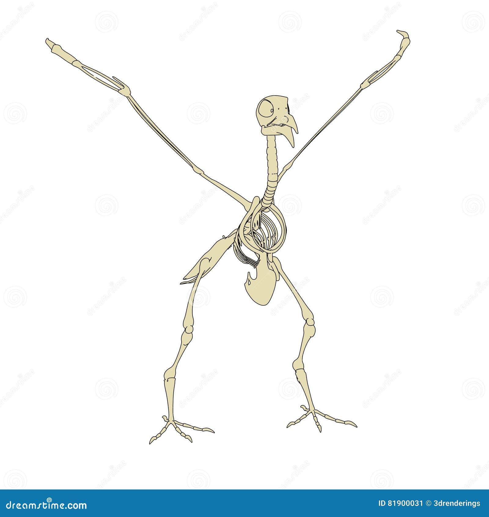Esqueleto de la paloma stock de ilustración. Ilustración de anatomía ...
