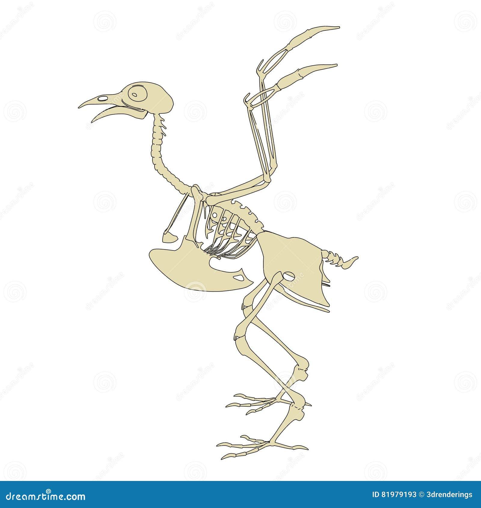 Esqueleto de la paloma stock de ilustración. Ilustración de spine ...