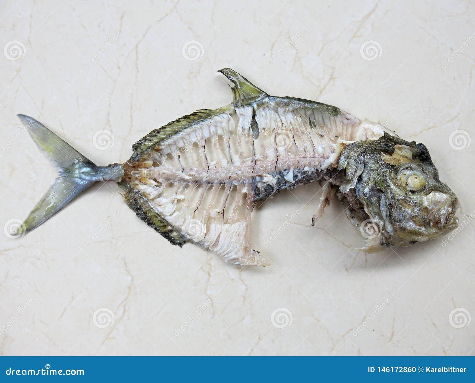 Esqueleto de los pescados Huesos de pescados tropicales