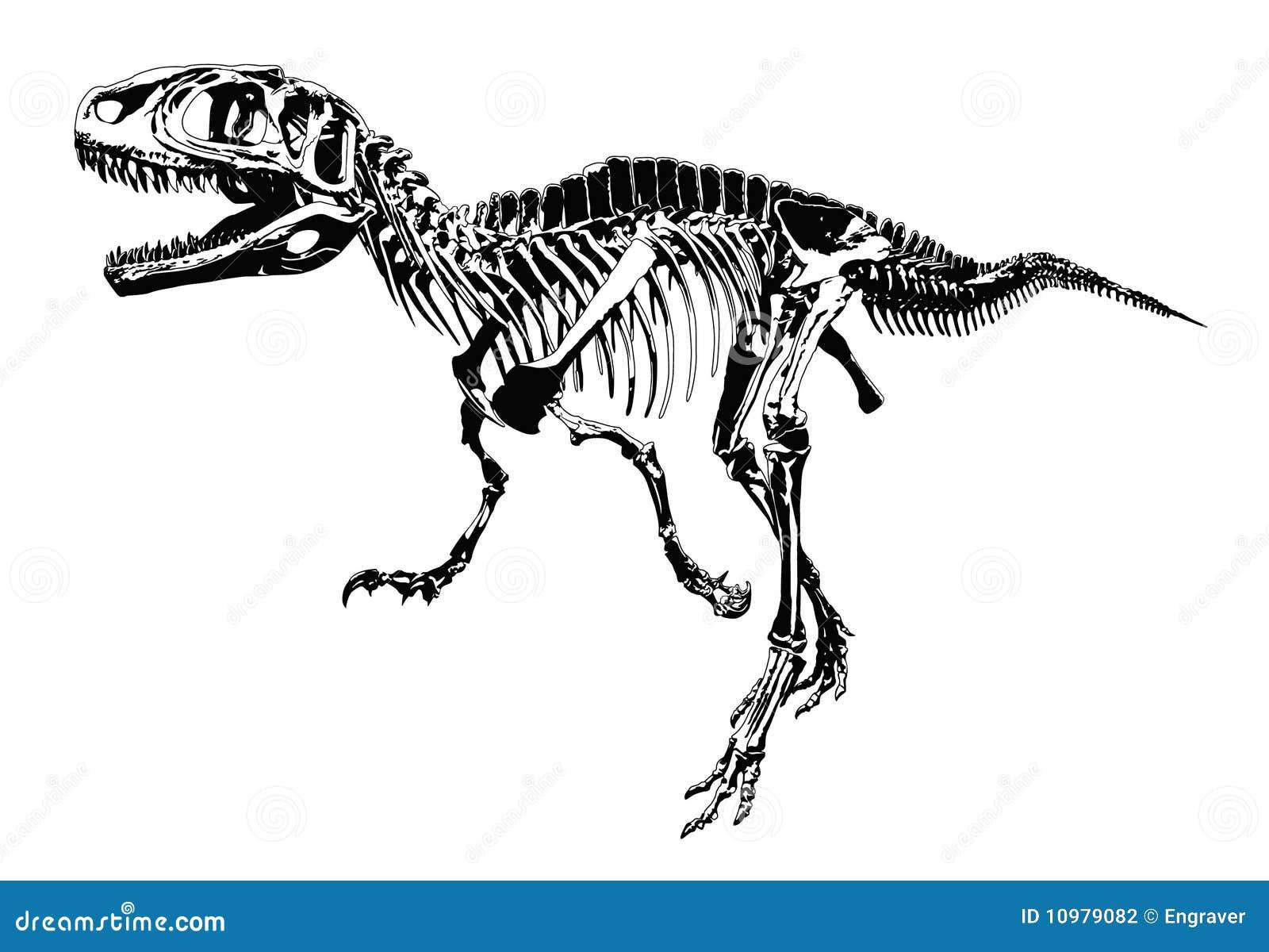 Esqueleto del dinosaurio ilustración del vector. Ilustración de ...