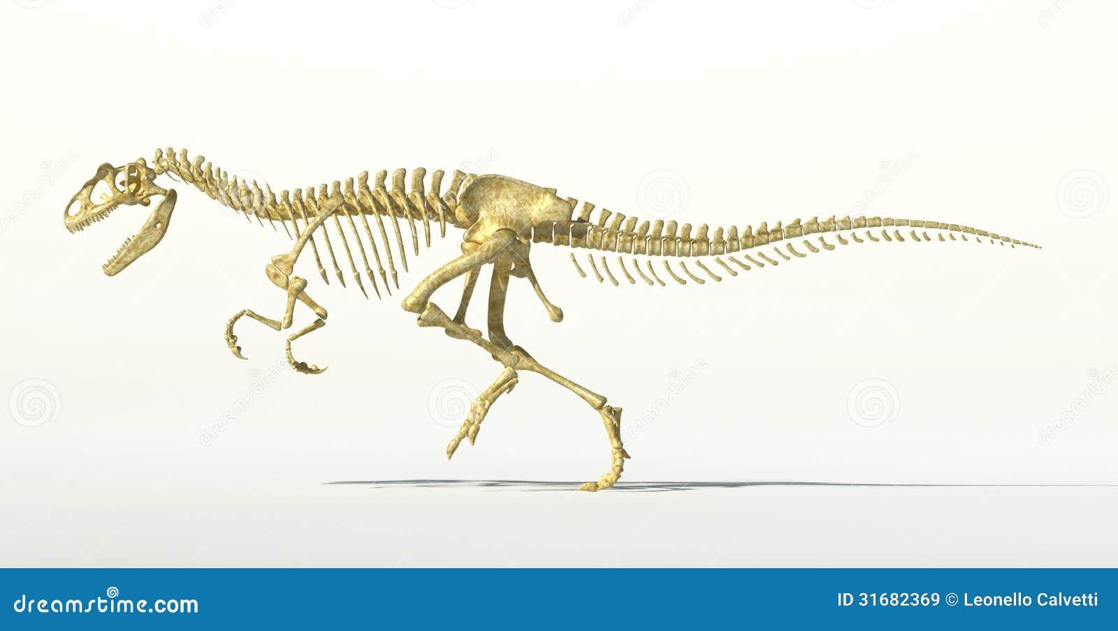 Esqueleto Fotorrealista Del Dinosaurio Del Allosaurus. Stock de ...