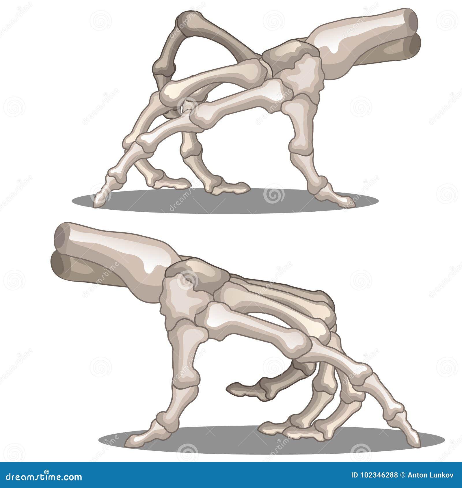 Esqueleto Humano De Arrastre De La Mano Ilustración del Vector ...