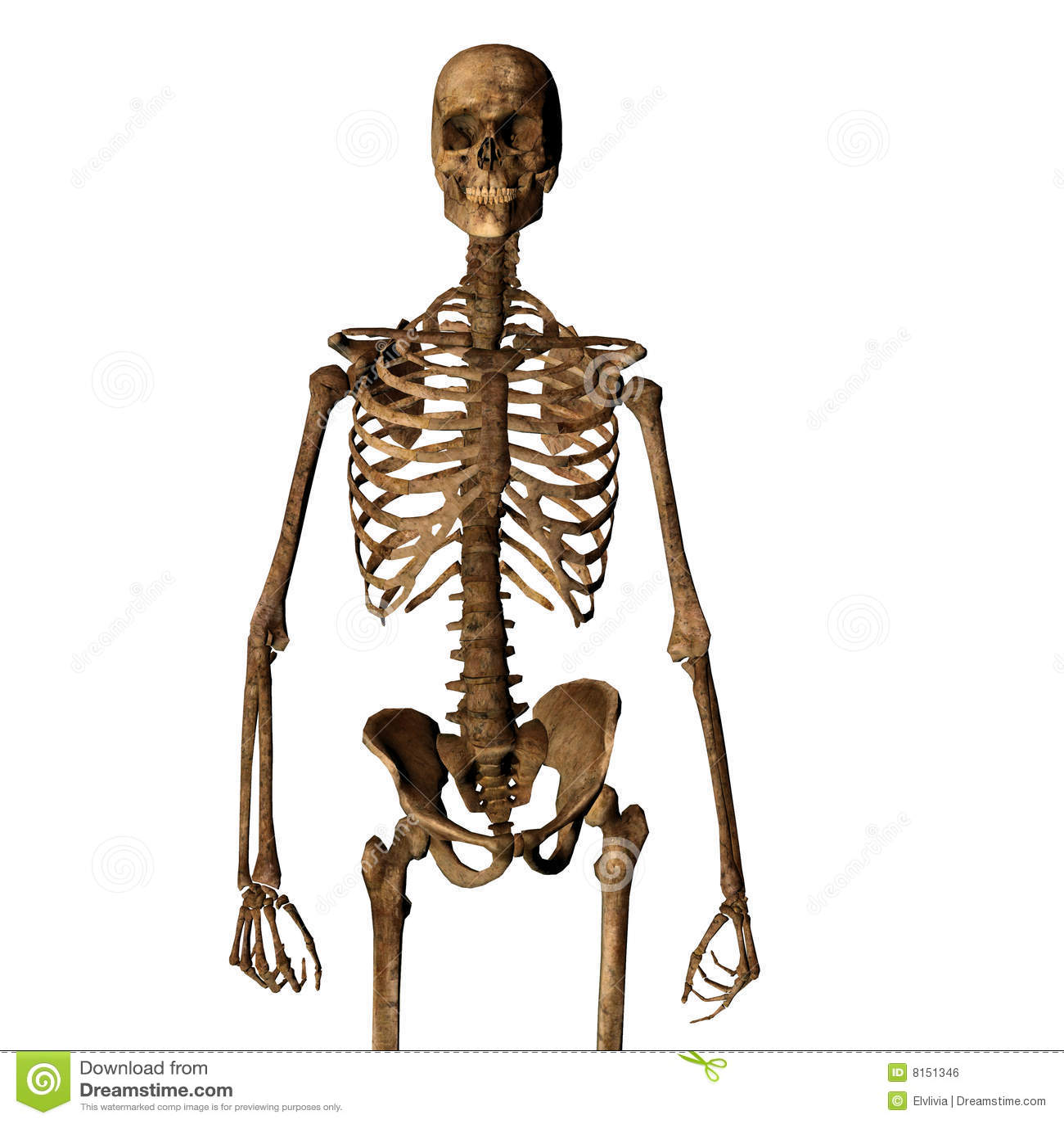 Esqueleto humano stock de ilustración. Ilustración de presentación ...