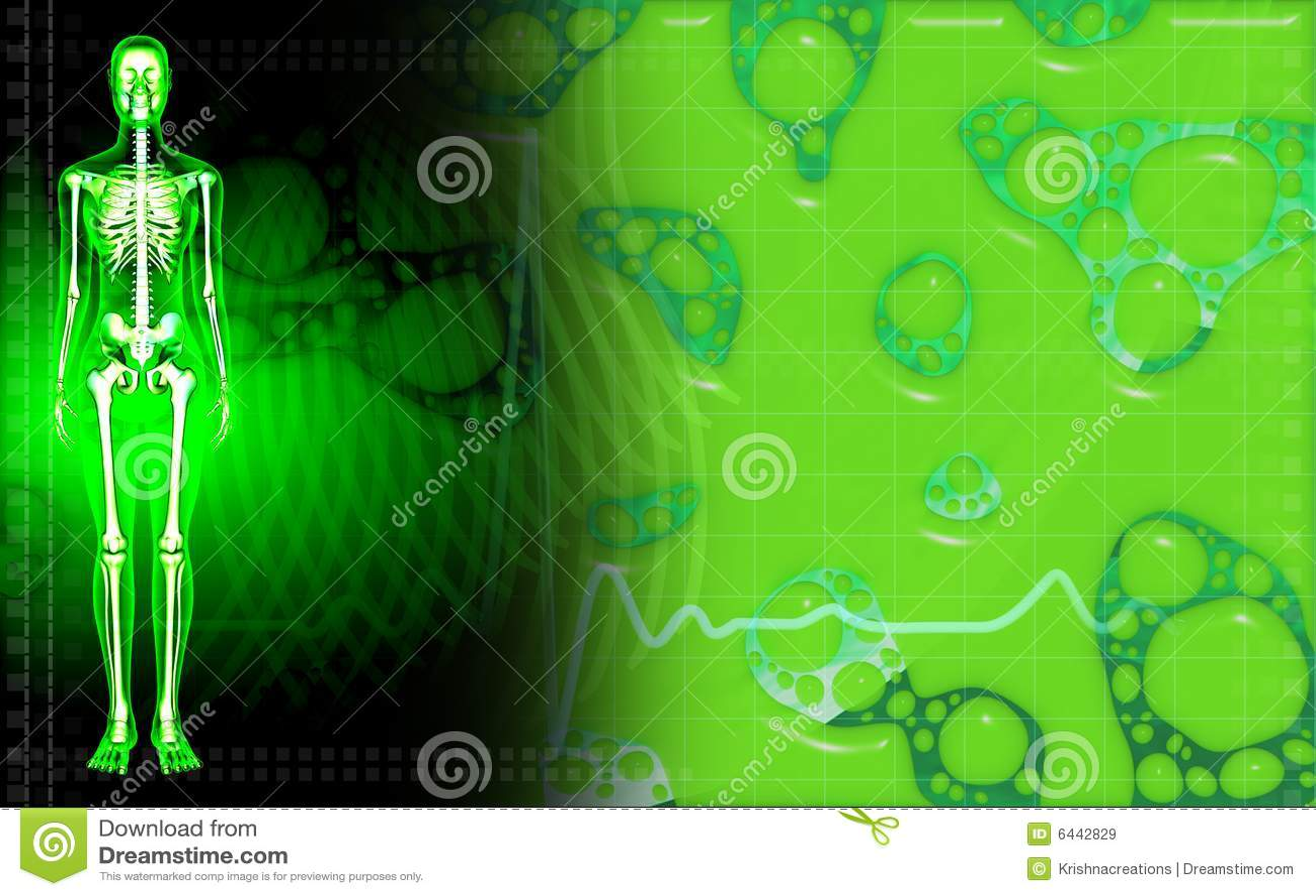 Esqueleto Humano Femenino En Color Verde Stock de ilustración ...