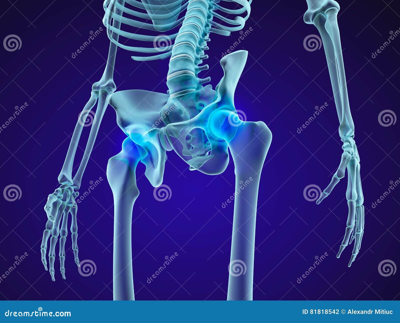 Esqueleto Humano: Pelvis Y Sacro Opinión De La Radiografía Stock de ...