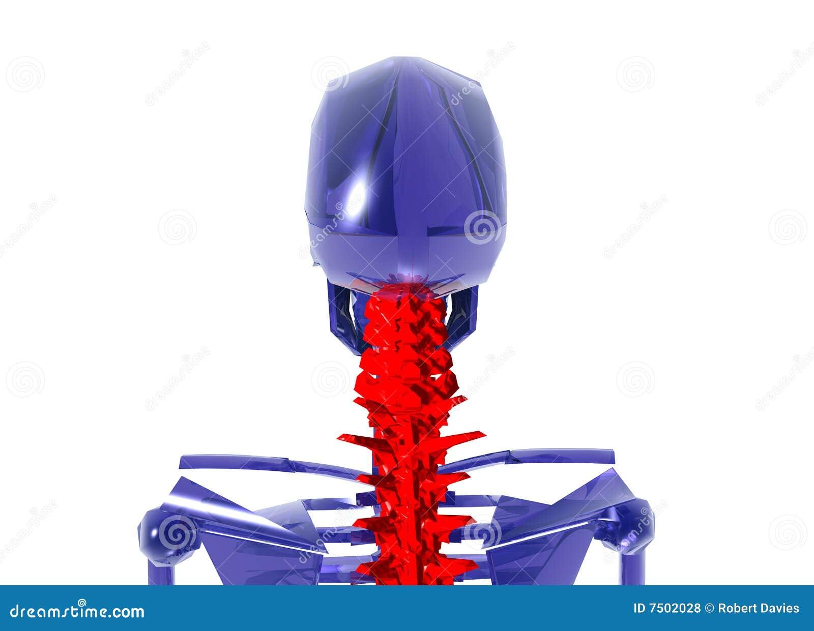 Esqueleto Humano Sobre El MaÌ n Cuello Blanco Stock de ilustración ...
