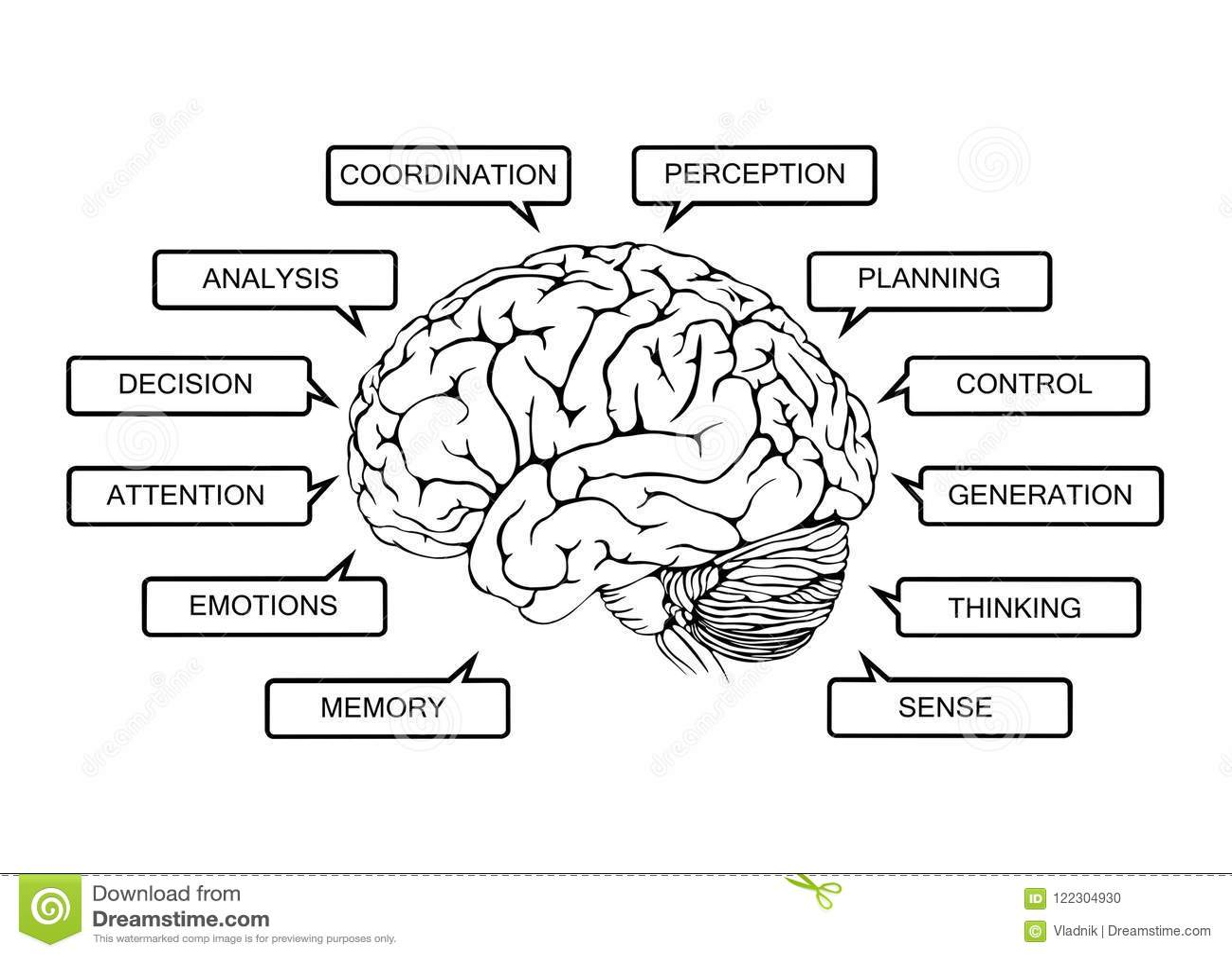 Esquema De Funciones Del Cerebro Humano Stock de ilustración ...