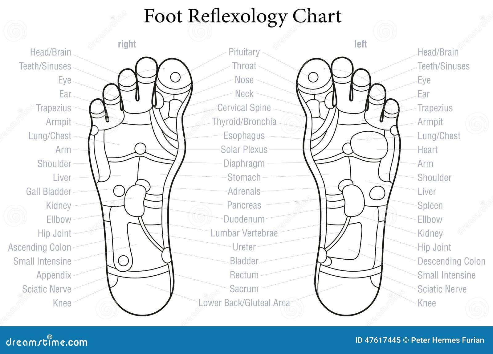 Esquema de la carta del Reflexology del pie