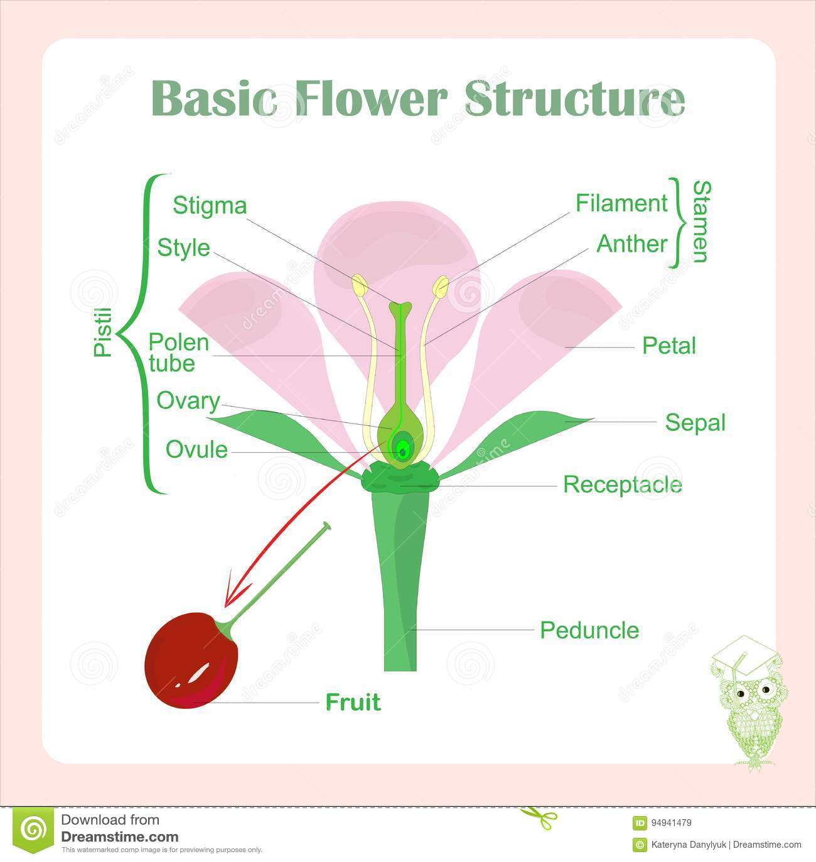 Esquema De La Estructura Básica De La Flor Aprendizaje De