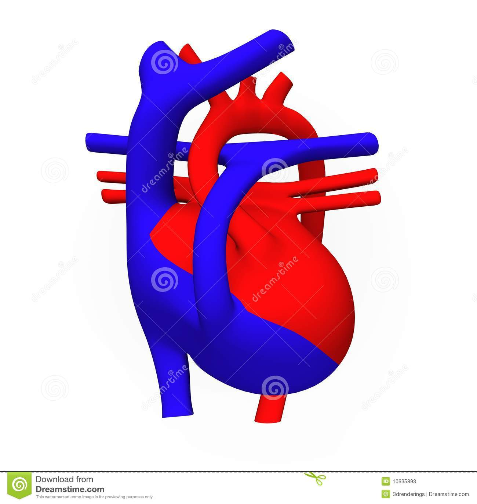 Fantástico Diagrama De Corazón Sin Etiquetas Composición - Anatomía ...