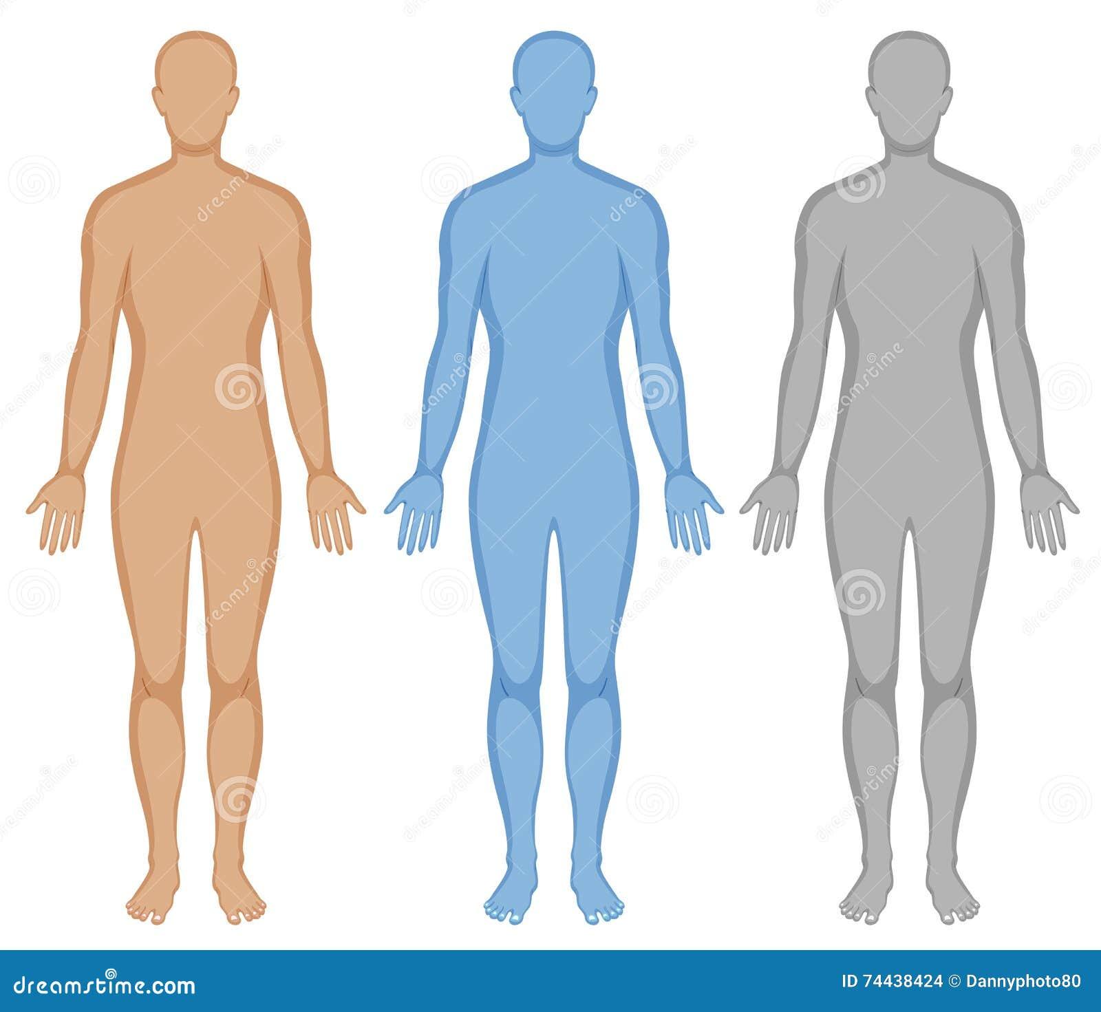 Esquema Del Cuerpo Humano En Tres Colores Ilustración del Vector ...