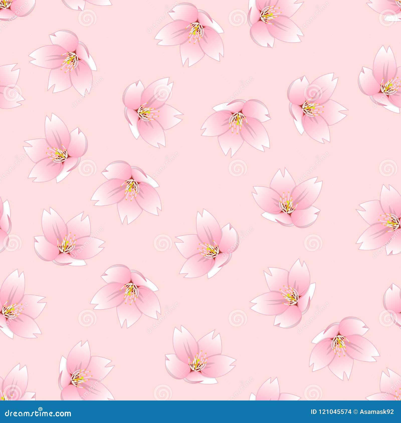 Esquema del serrulata del Prunus - flor de cerezo, Sakura en fondo rosado Ilustración del vector